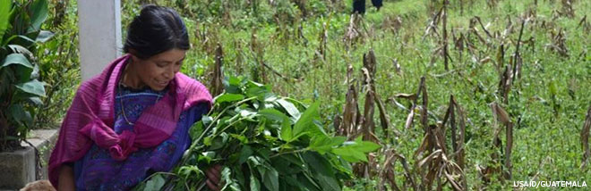 Guatemalan woman outside holding a lot of leafy greens.