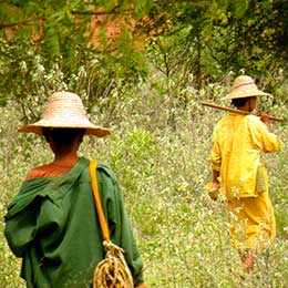 © 2012 Gloria Senaris, Courtesy of Photoshare. Women walk to work in the fields in Laos.