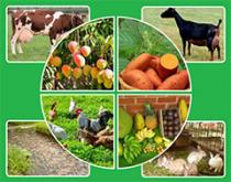image of crops and livestock
